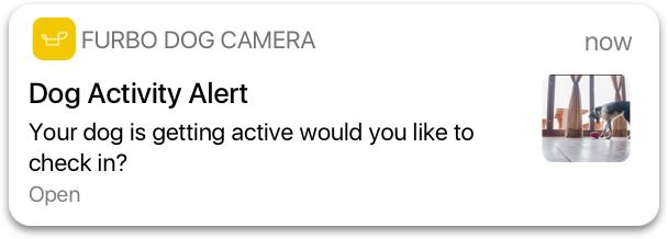 dog_activity_alert.jpg