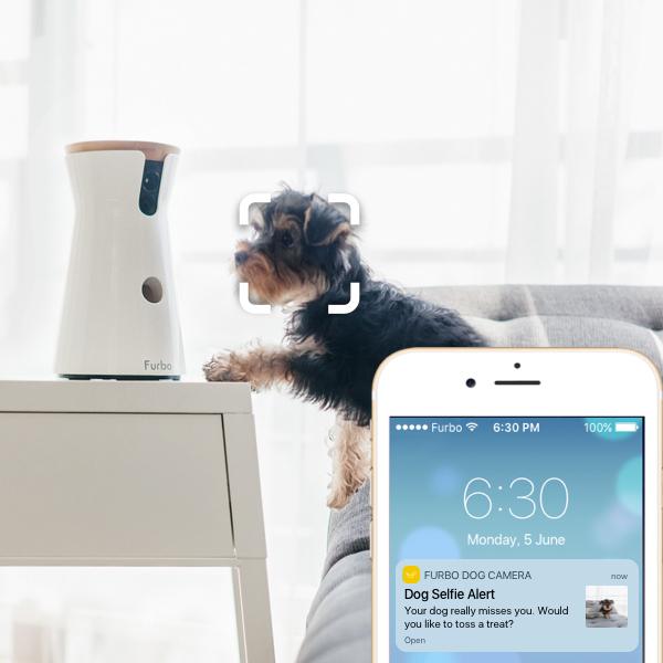smart_dog_alert.jpg